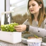 Indoor-Kräutergarten – Kräuter und Mini-Gemüse anbauen